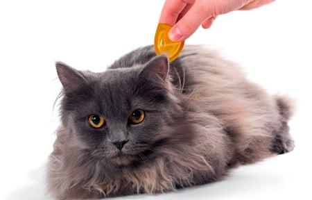 poniendo una pipeta a un gato