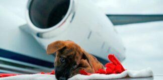 perro avion