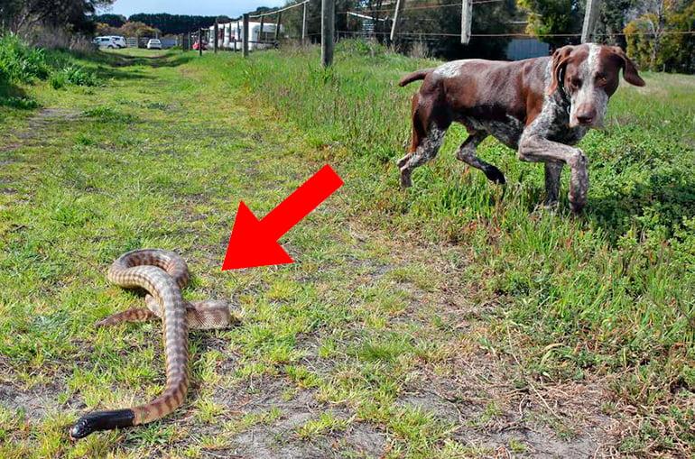 perro-paseando-junto-a-una-serpiente