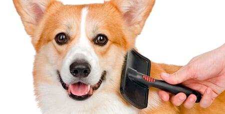 perro mudando su pelo