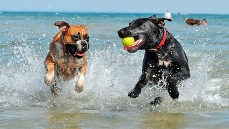 perros jugando en el mar