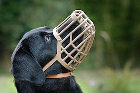 perro con bozal de rejilla