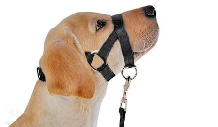 perro con bozal de lazo
