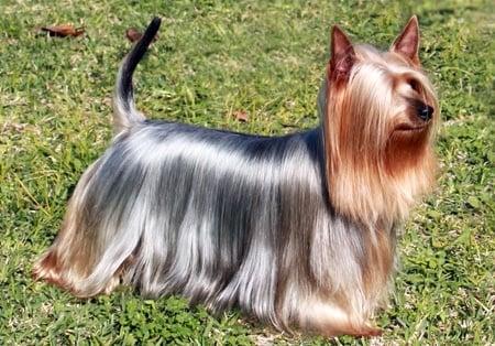 perro con pelo brillante