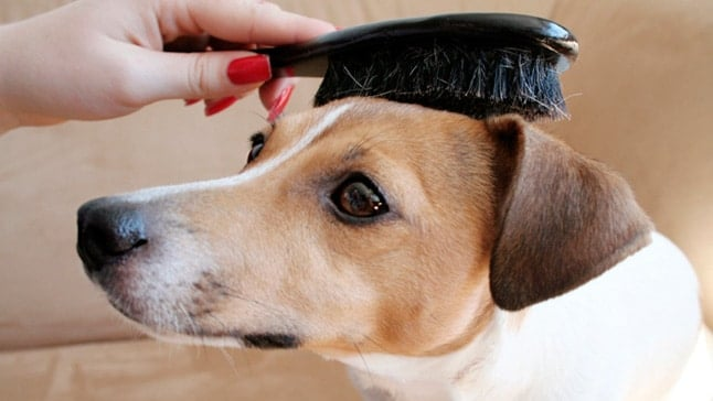 cepillar a perro