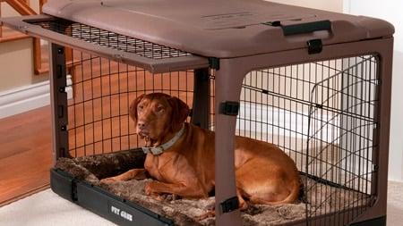 Perro descansando dentro de su jaula