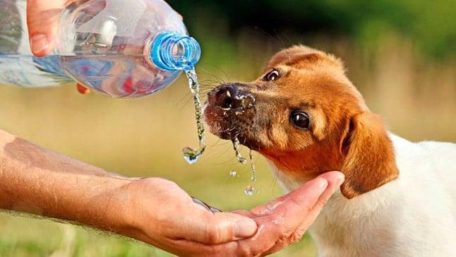 perro bebiendo agua