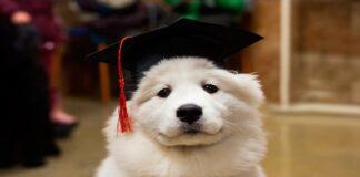 perro con pedigree
