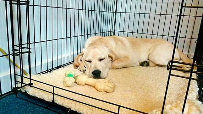 How To Train Your Dog To Sleep In A Kennel