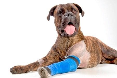 miel para heridas en perros