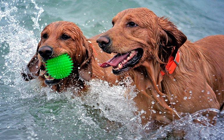 perros-jugando-con-el-agua-del-mar
