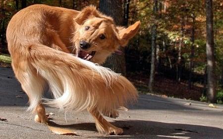 perro con toc dando vueltas