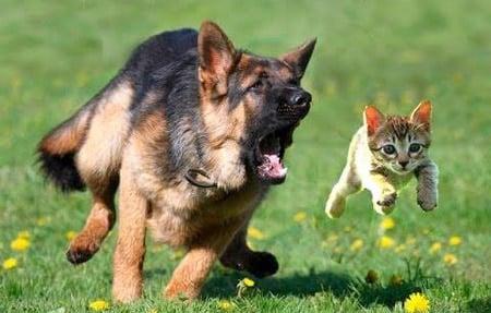 perro persiguiendo a un gato