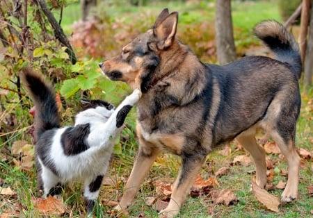 perro peleando con gato