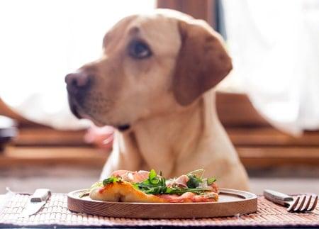 perro esperando para comer