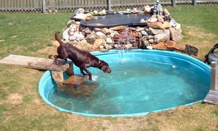 piscina para perros en agujero