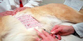 alergia en perro