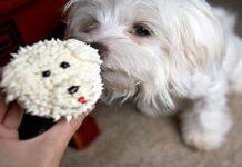 cupcakes para perro