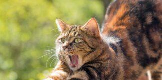 gato-repelente