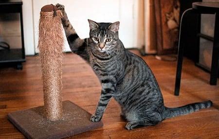 gato junto a rascador