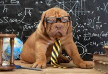 perro profesor
