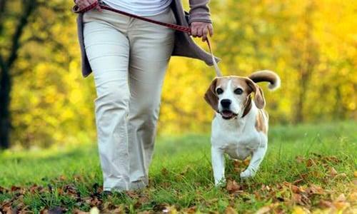 Resultado de imagen para paseando perros