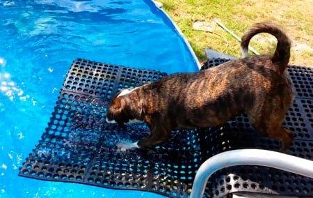 rampa para perros en piscina