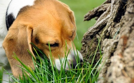 perro jugando a olfatear comida