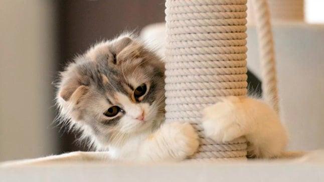 rascador gatos