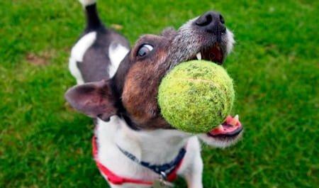 perro mordiendo la pelota