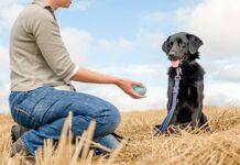 adiestrador de perros