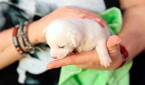 cachorro en brazos