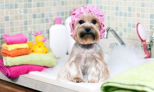 cada cuanto bañar a un perro