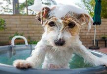 perro en baño