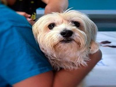 perro asustado en veterinario