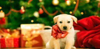 cachorro regalo