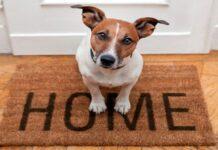 perro en la entrada de casa