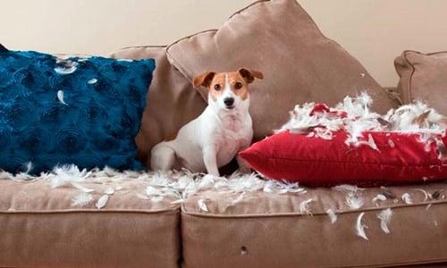 perro rompe sofa