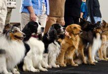 perros en clase de adiestramiento
