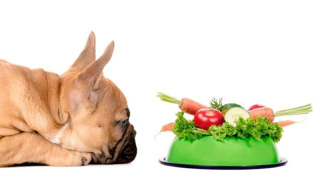pienso vegano