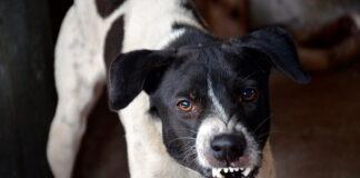 Perro-con-signos-de-tener-la-rabia