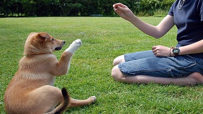 adiestrando a un perro