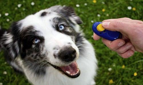 clase de adiestramiento canino