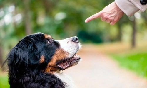 corregir a un perro