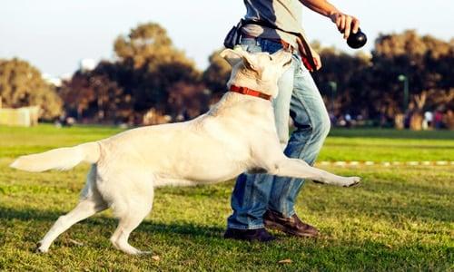 jugar con perro en la calle