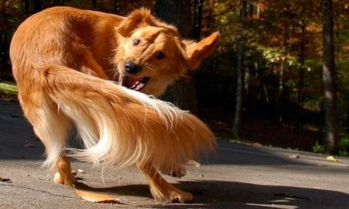 perro muerde cola