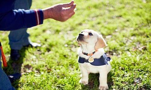 perro en clase de adiestramiento canino