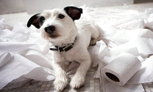 perro ompe cosas