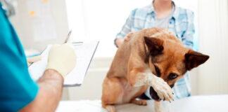 perrita-en-revisión-veterinaria2