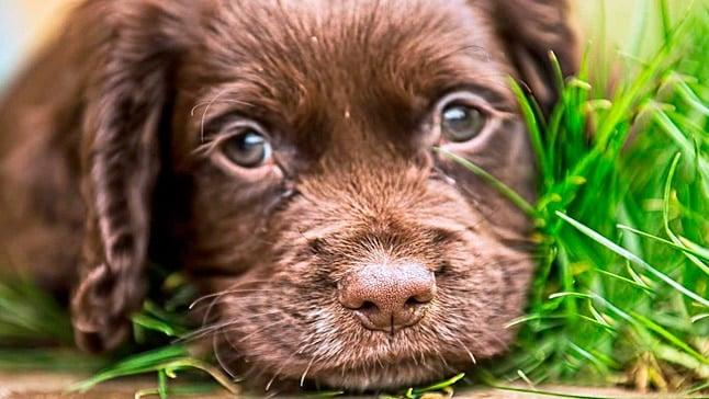 perro con parasitos